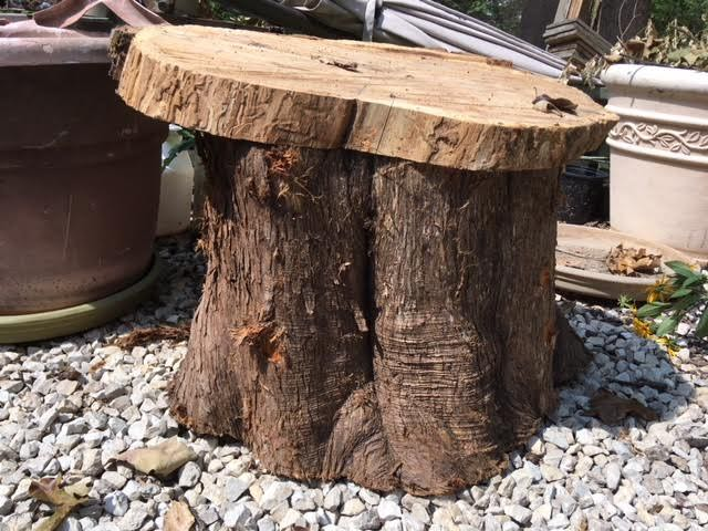 Testing the smaller cedar piece on the cedar stump for a seat. (Photo by Charlotte Ekker Wiggins)