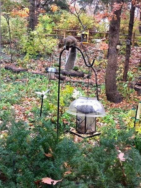 Fall Garden Tips Gardening Charlotte