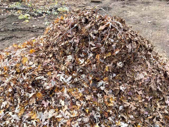 A standard pile of drying leaves that haven't been shredded. (Photo by Charlotte Ekker Wiggins)