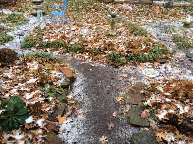 The garden path from my front door covered in ice. (Photo by Charlotte Ekker Wiggins)
