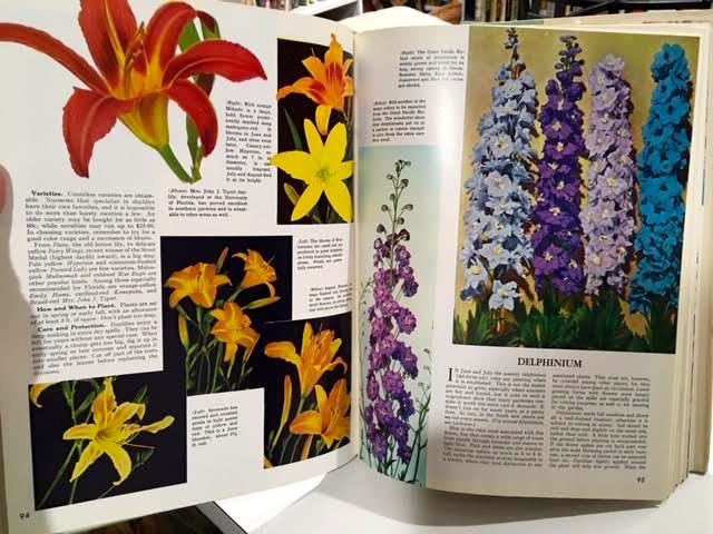 Photographs of daylilies, left, and delphiniums, right. (Photo by Charlotte Ekker Wiggins)