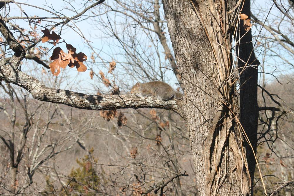One of the squirrels in my garden enjoying winter sunshine. (Photo by Charlotte Ekker Wiggins)