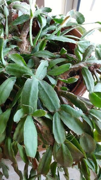 Mystery plant 2.jpg