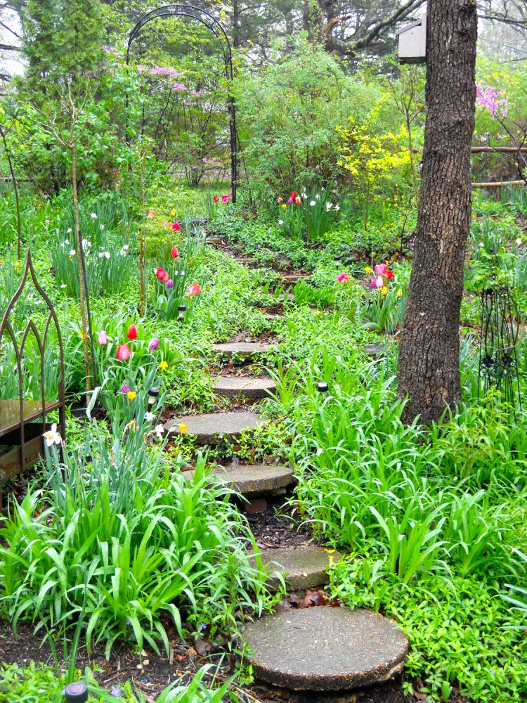 Tulips welcome visitors walking down my front door path. (Photo by Charlotte Ekker Wiggins)