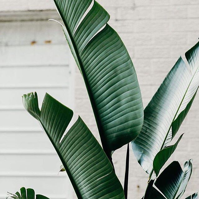 Just because we love plants 🌿 -  pic @samrilesphotography found on @spiritual_lab #plantlife #green #earth #wellness