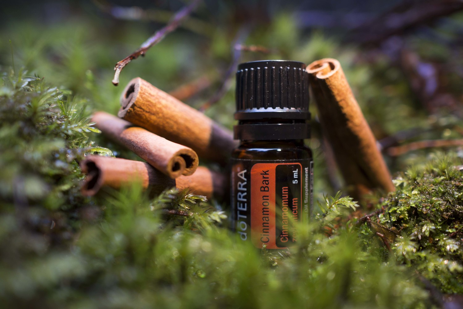 Bilderesultat for cinnamon bark doterra