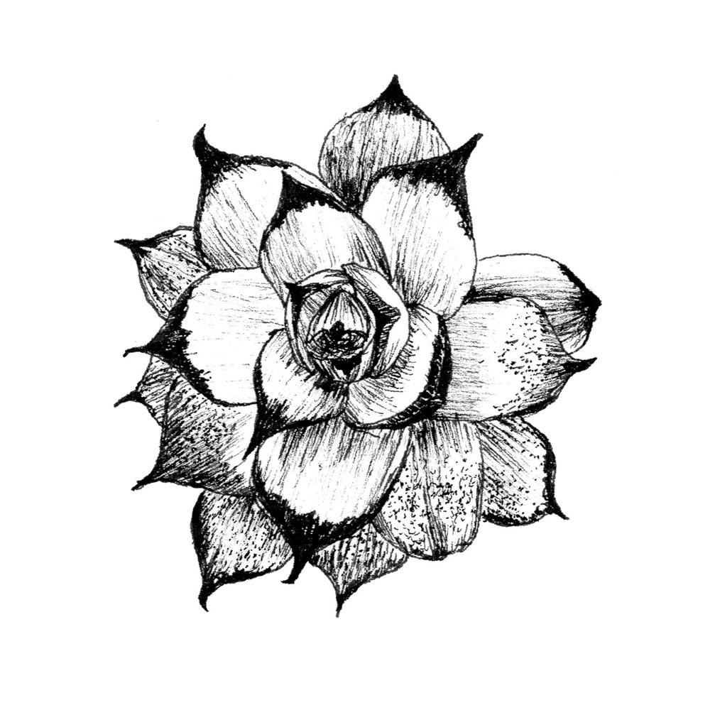 Intricate_fineliner_succulent.jpg