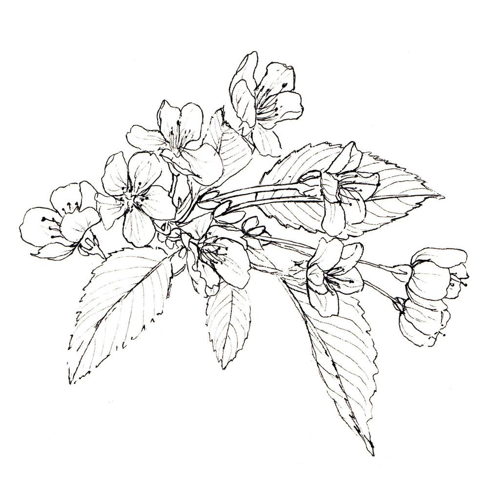 Blossom002a_1500w.jpg