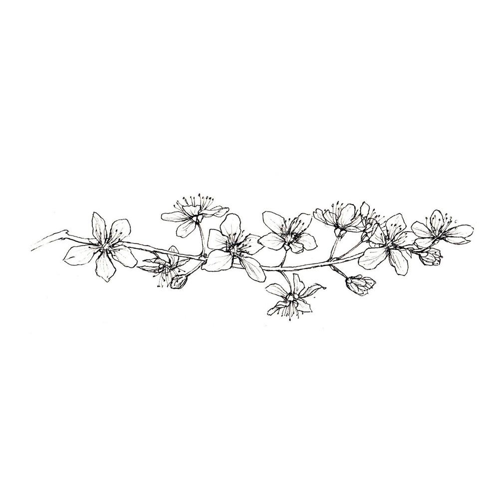 Blossom005_1500hw.jpg