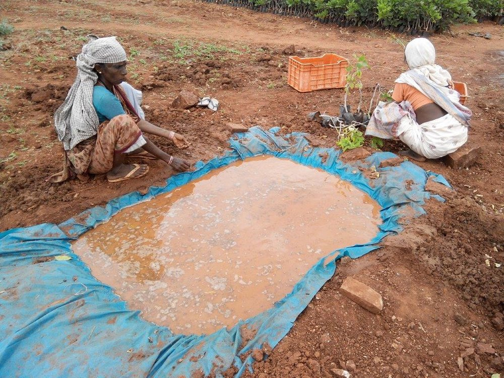 Ladies cleaning soil from sapling roots