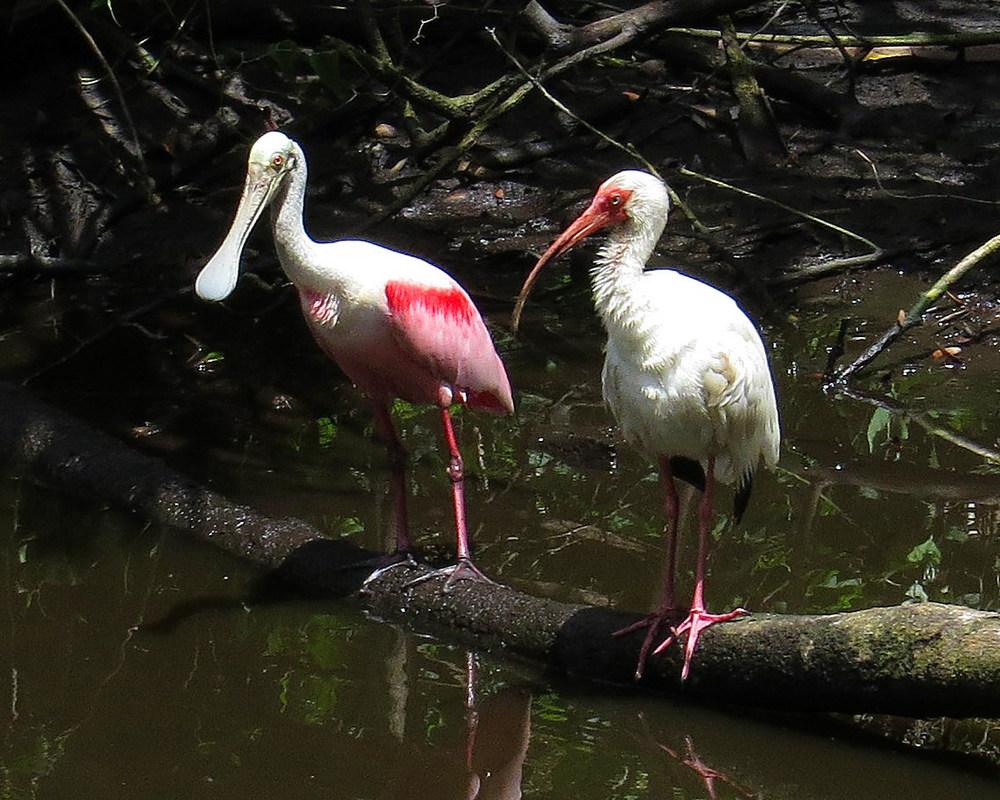 wadingbirds.jpg