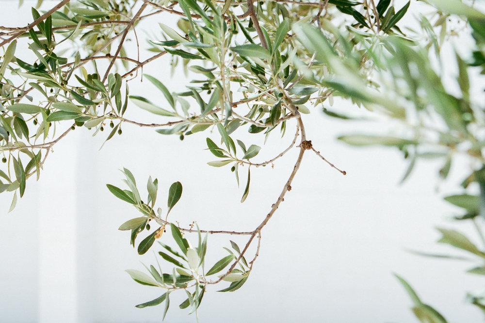 Masseria Moroseta -  Photography by   Morgane Erpicum