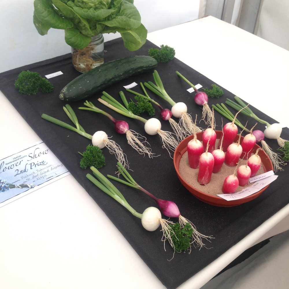 DRESS label INTO COLOUR SS16 gallery: Second Prize Salad Display, Clutton Flower Show