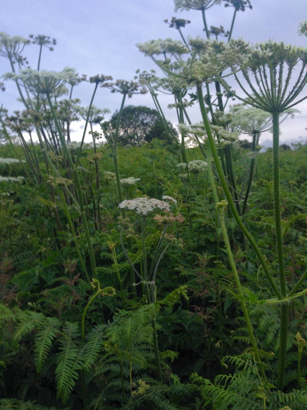 DRESS label INTO COLOUR SS16 gallery: Fern & Cow Parsley Chew Magna Hill