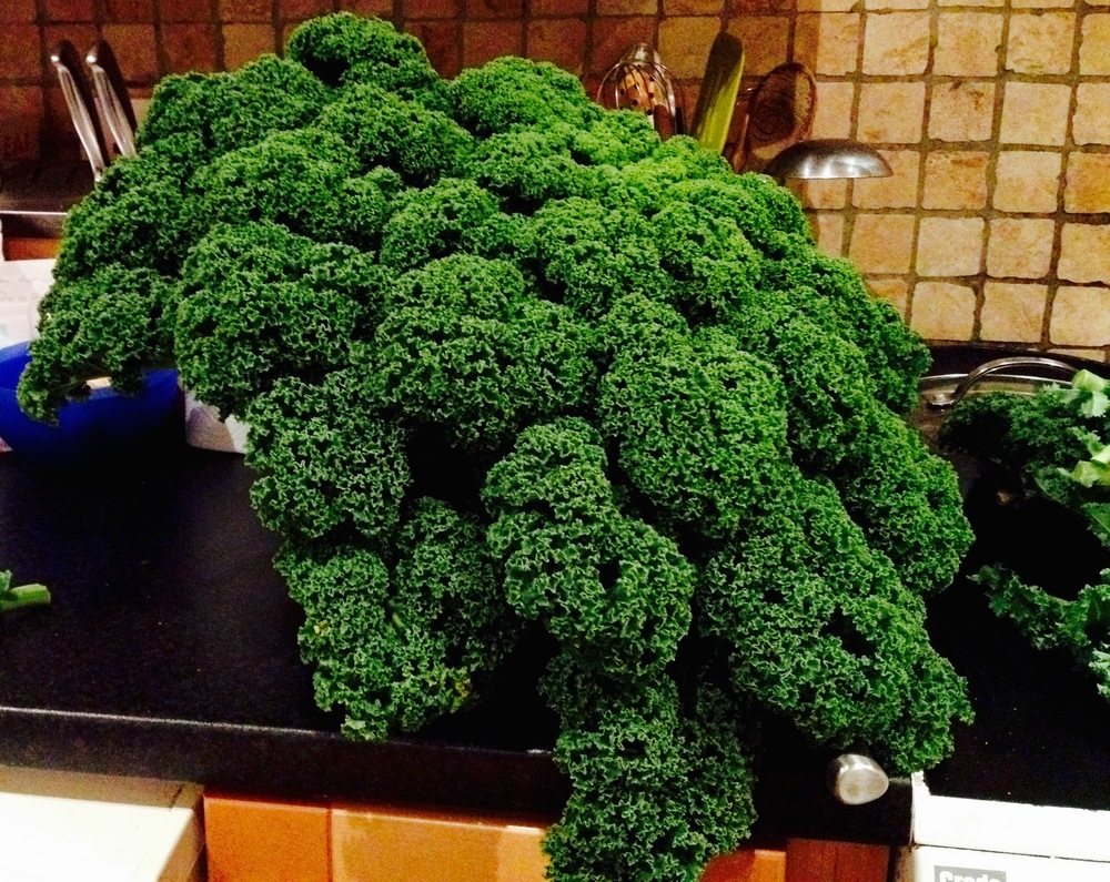 99p for this beautiful branch of Kale.