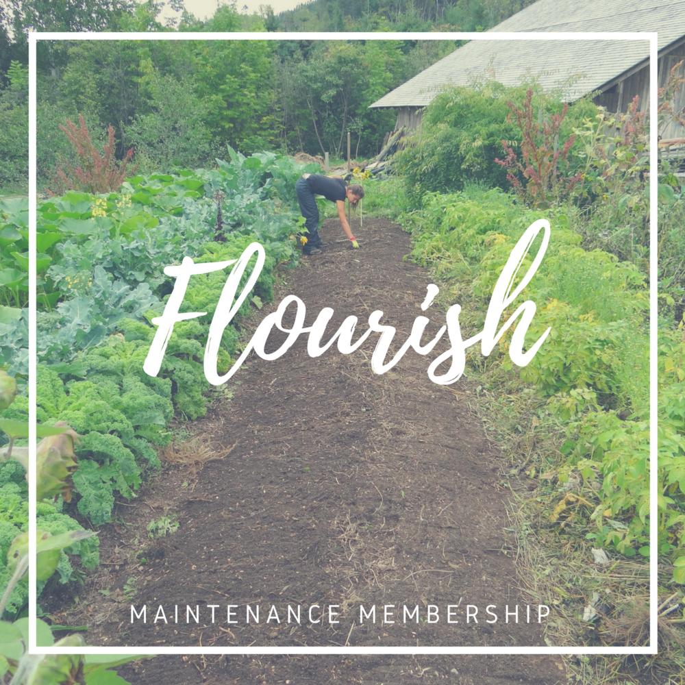 03 - Maintenance Membership (standard maintenance support)