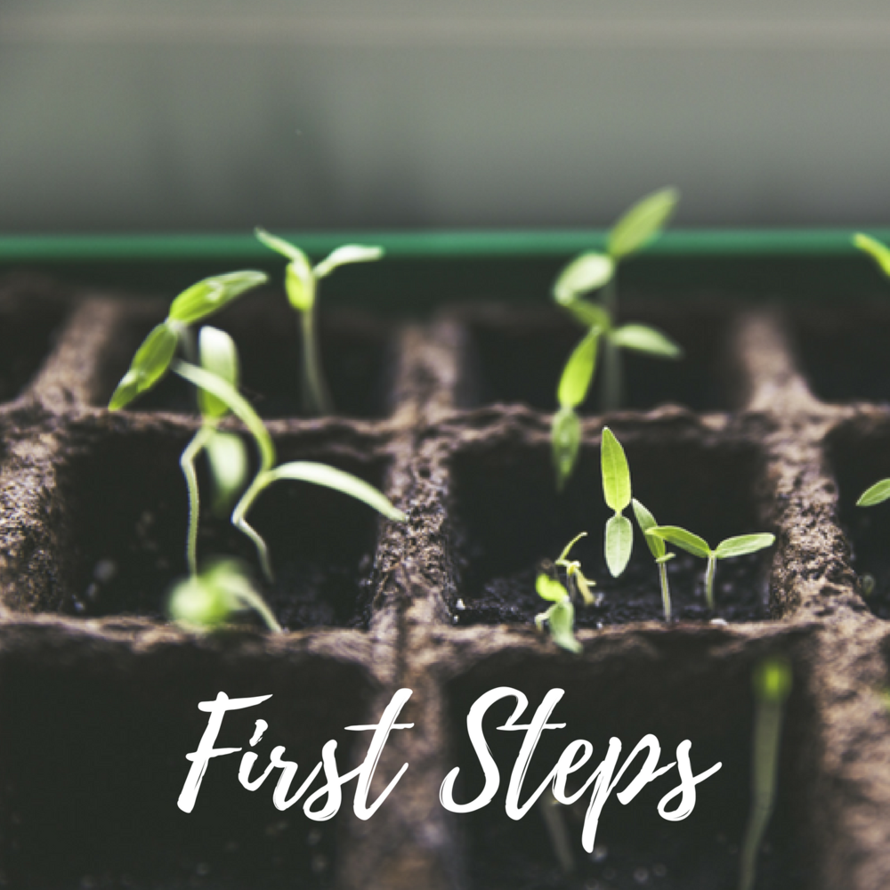 first steps - text.png