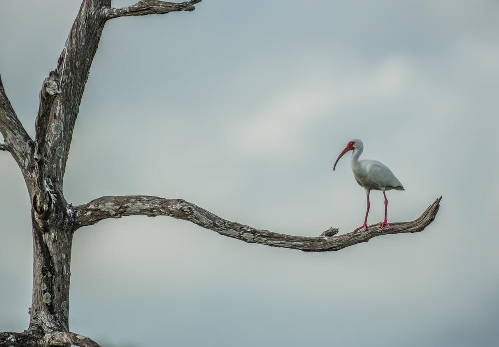 Everglades l FOR WEB l -1.jpg