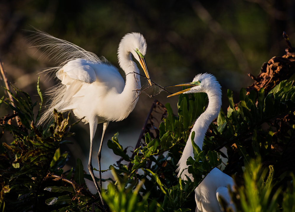 Everglades l FOR WEB l -53.jpg