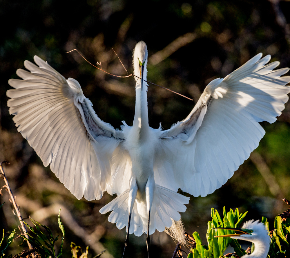 Everglades l FOR WEB l -54.jpg