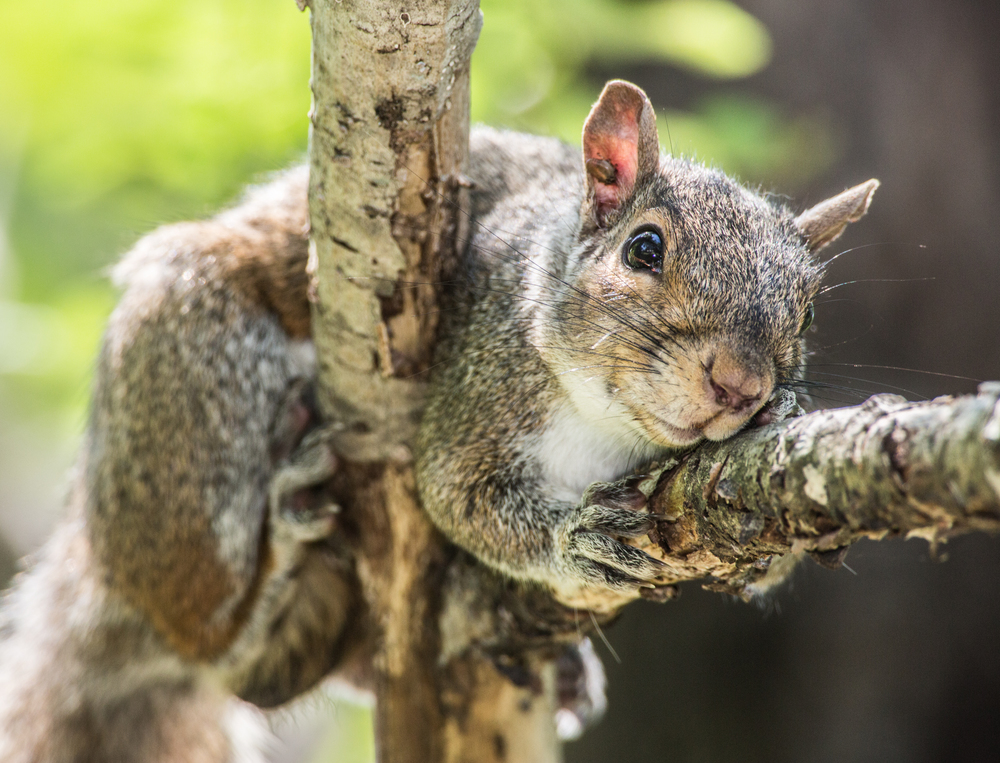 squirrel pic for web -1.jpg