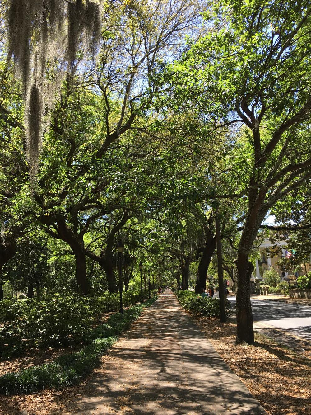 Keily Savannah 2.jpg