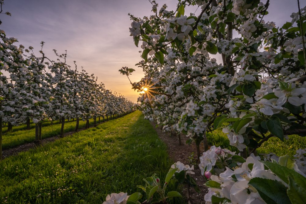 9. Mount Hood Orchards - Mount Hood, WA
