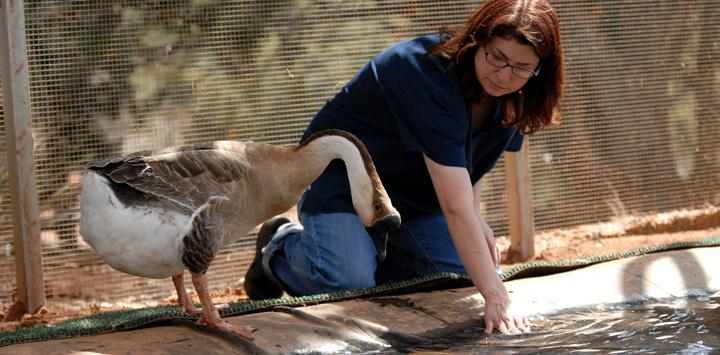 Henry-goose-wild-friends-8653.jpg