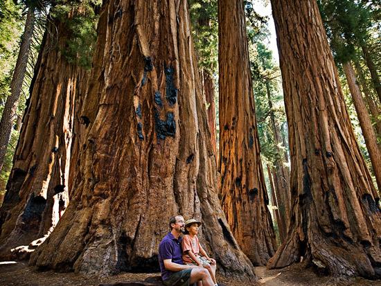 sequoia-fatherson.jpg