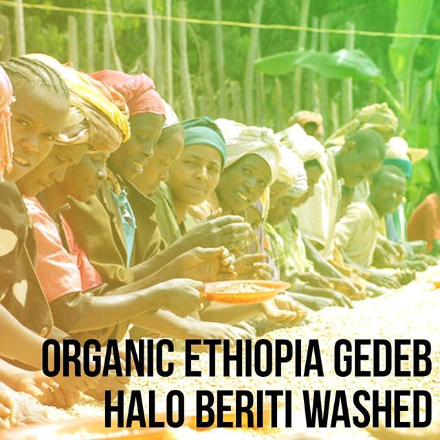 Introducing Klatch Coffee's Organic Ethiopia Gedeb Halo Beriti Washed!  Packed with juicy flavors of cherry and papaya, with lingering mango quickness and clean fruit through the finish! Ethiopian coffees are always a Klatch favorite. Check it out on our website [link in bio] and #KlatchOn
