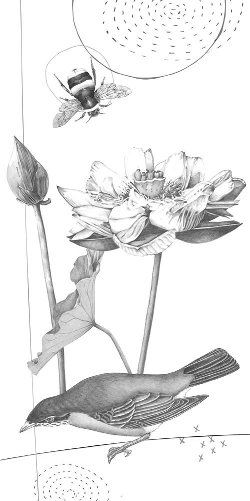 Artworkgraphite Bird And Lotus Flower Christine Anderson Illustration