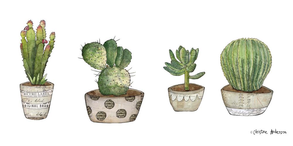 pb potted 4 cacti.jpg
