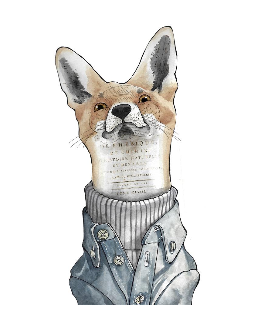CA Fox texture.jpg