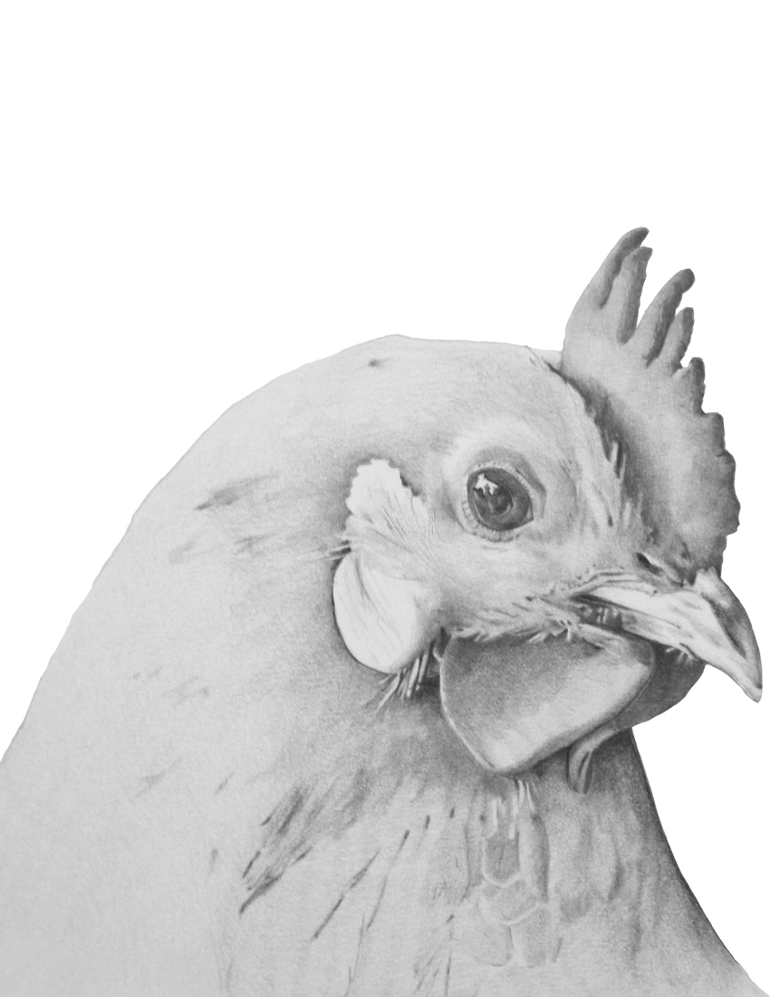 CA Rooster head Black and white.jpg
