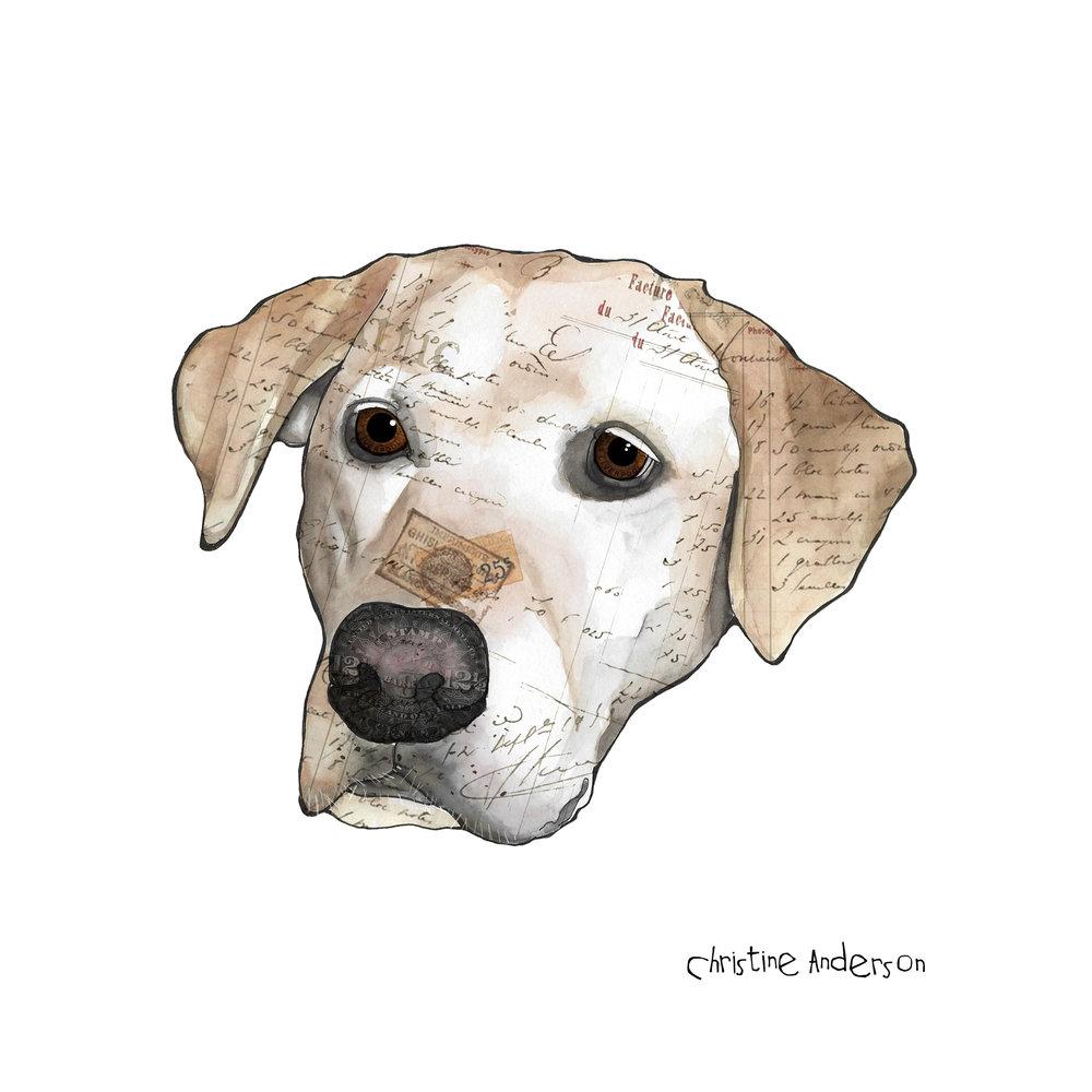 Colby dog texture.jpg