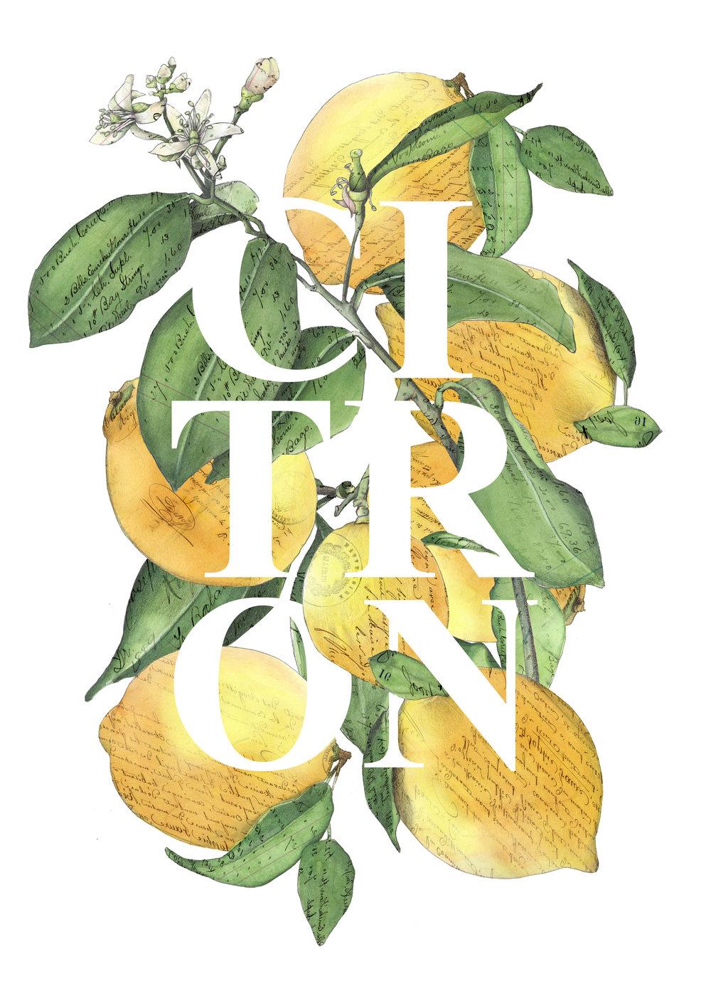 CA CITRON lemons art.jpg