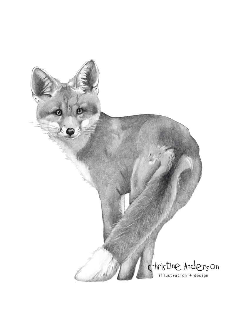 fox-graphite-DARK-INSTA.jpg
