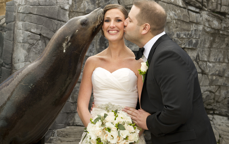 sealion-kiss-couple.jpg