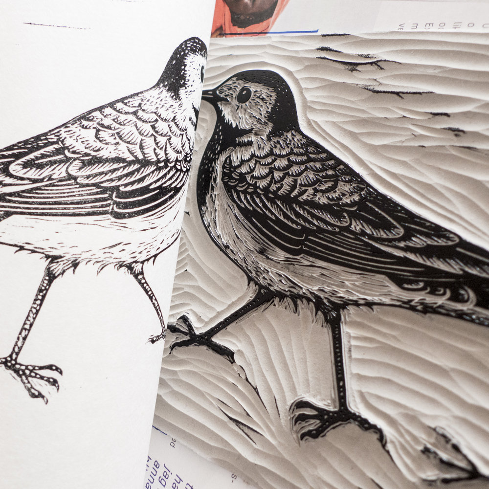Linocut of a white wagtail. Limited edition of 20. Year 2015.