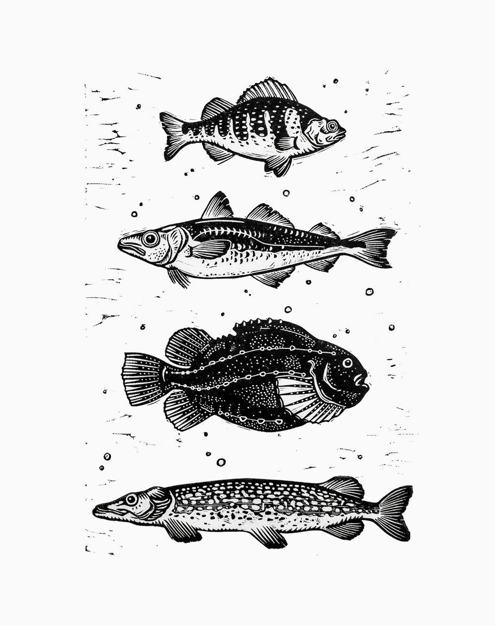 Original linocut with four typical Swedish fishes: abborre (European pirch), alaska pollock/torskfisk (a kind of cod), sjurygg (lumpfish or lumpsucker) and gädda (pike).  20 x 30 cm linocut. Edition of 10. Year 2015.