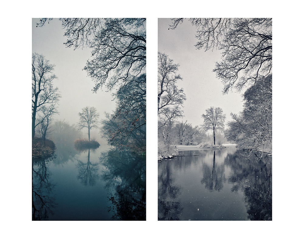 Single Tree Diptych
