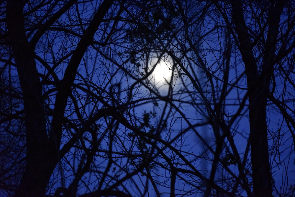 The moon shines through trees during a lunar gathering at Oak Spirit Sanctuary on Saturday, April 8, 2017. Community members celebrate the full moon every month, with each month's moon representing a different theme that corresponds with the season and connects the community with the earth.