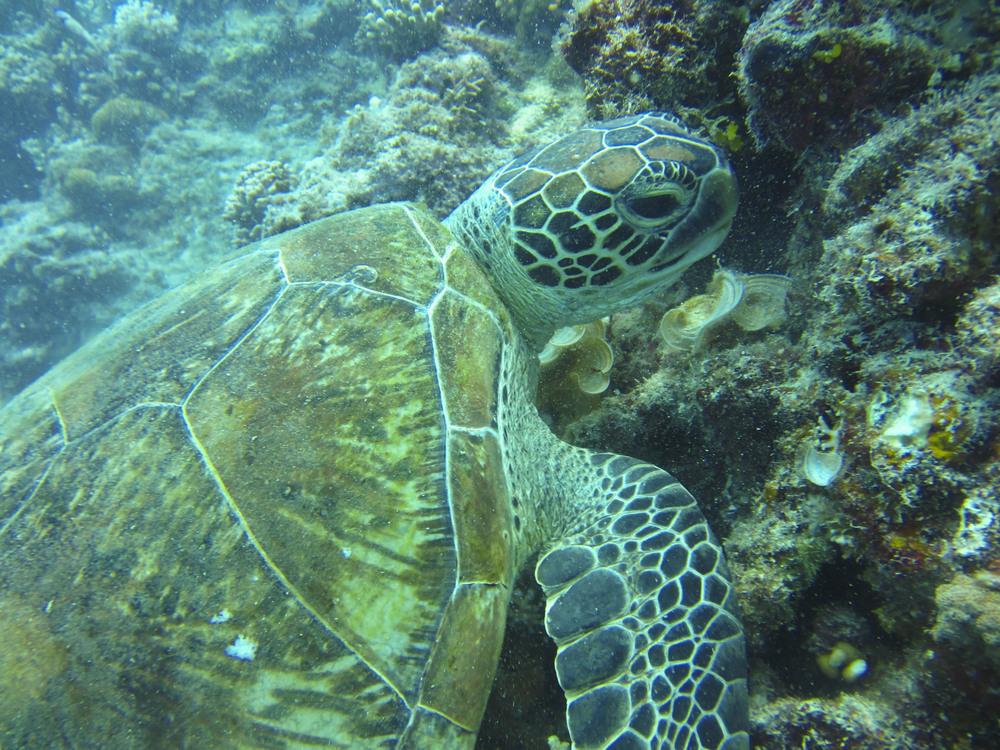 Debajo del Mar.JPG