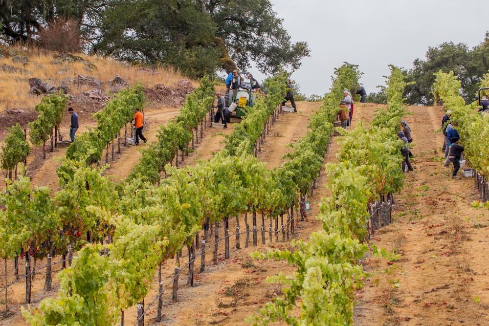 Reynoso Harvest 2012-98.jpg