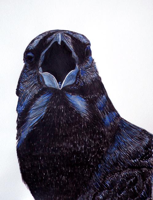 crowyell.jpg
