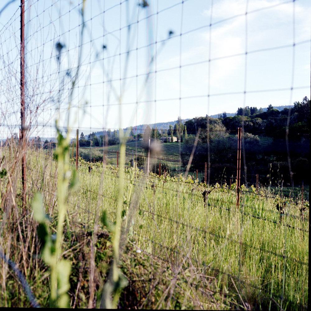 fence18.jpg