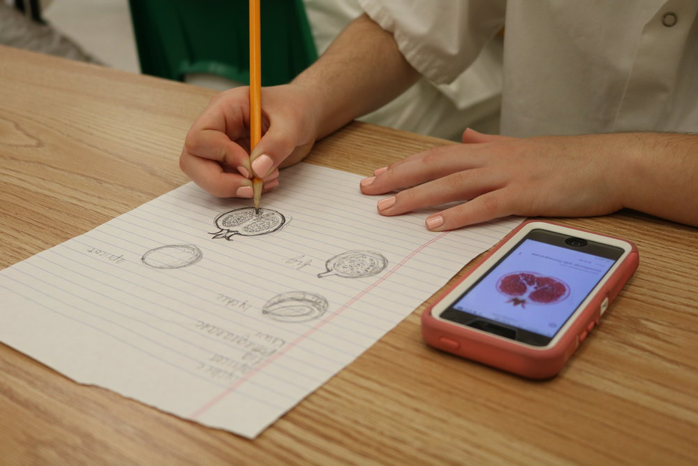 Ally Berrich, 17, sketches a pomegranate before she works on a marzipan project in her baking and pastry course at the Center of Applied Technology North in Severn, Md., on May 5, 2016.