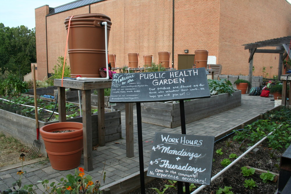 The Public Health Garden Club began at the University of Maryland, College Park in 2010 as a graduate student project. Today, it is fueled by both undergraduate and graduate students, as well as faculty, staff and local volunteers. All are welcome to try their hand in the greenery tucked in between Eppley Recreation Center and the Public Health building.
