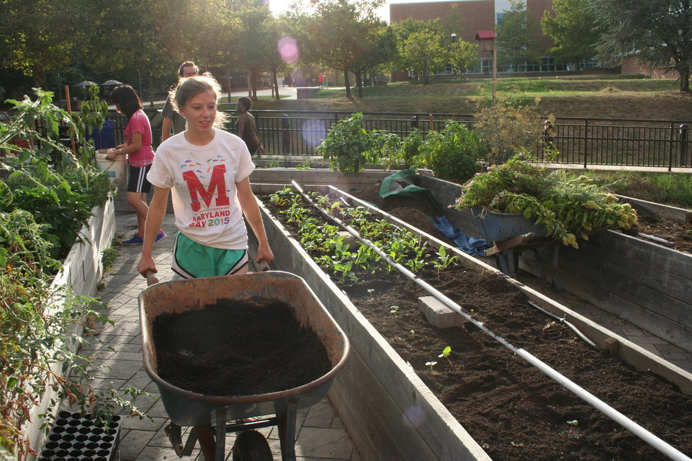 Ann Marie Huisentruit, the Public Health Garden Club president and senior elementary education major, wheels compost to the terraced area where late seasoned plantings of squash, basil, hot peppers and cherry tomatoes grow on Sept. 28, 2015. Huisentruit took office as president last May, but has been a member of the club since December 2013. She said the club will soon offer garden plots for the community to purchase.