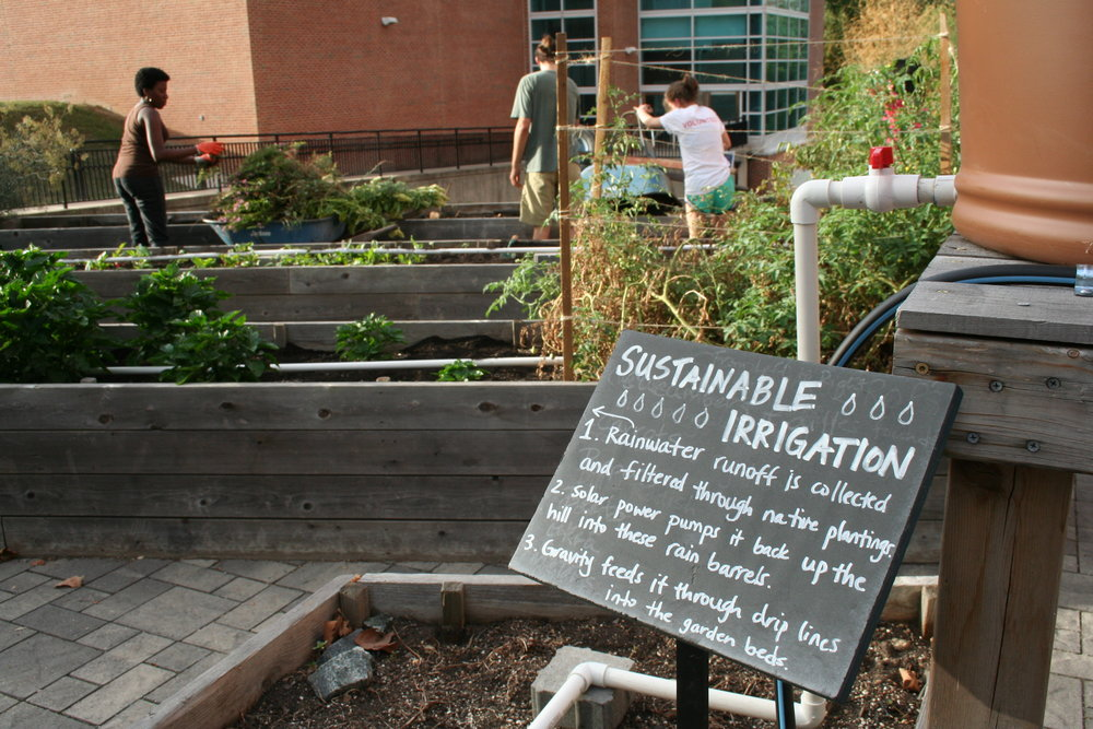 Students work in the garden terrace in preparation for the fall plants on Sept. 28, 2015. The garden was recently terraced in the spring of 2015. The club focuses on sustainable gardening practices, such as the irrigation described in the above sign.